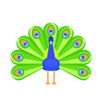 flat style of peacock vector image