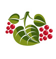 Simple green deciduous tree leaf with red seeds vector image