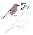 Educational game connect dots to draw jay bird vector image