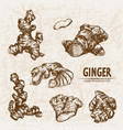 digital detailed line art ginger vector image