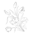 PrintHand drawn tulips vector image