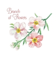 Branch of apple blossom vector image