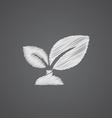 plant sketch logo doodle icon vector image