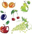 hand drawn fruit vector image