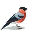 Realistic bird Bullfinch on a white background vector image