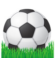 football soccer ball in grass vector image