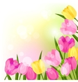 Spring flowers tulips natural background vector image