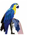 Colorful parrot on a wooden branch vector image