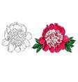 hand drawn peony flower set on vector image