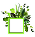 exotic tropical leaves vector image