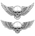 Set of winged skulls isolated on white background vector image