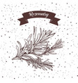 rosemary herb and spice label engraving vector image vector image