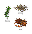 flat sketch spices condiments herbs set vector image