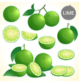 Set of green lime with leaf in various styles vector image