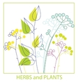 twigs herbs and plants vector image