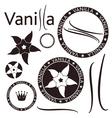 Vanilla vector image vector image