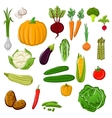 Farm vegetables for agriculture design vector image