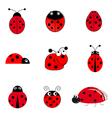 set of ladybugs vector image