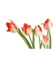 Five beautiful tulips isolated on white EPS 10 vector image