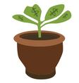 Dollar plant vector image