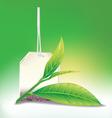 tea leaf vector image