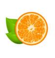 fresh orange isolated on white background vector image