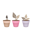 Three Abstract Brown Trees in Flower Pots vector image vector image