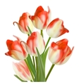 Beautiful bouquet of tulips on a white EPS10 vector image