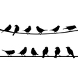 birds on string vector image