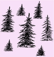 Christmas trees pine trees vector image