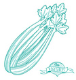 Outline hand drawn sketch of celery flat style vector image