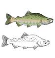 Hunchback salmon fish vector image