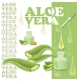 Aloe Vera leaves slices with pipette and drops vector image