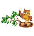 An owl watching the eggs vector image vector image