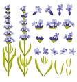 Lavender flowers constructor vector image