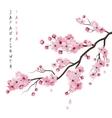 Realistic Sakura Branch vector image