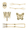 skeleton parts icon human skeleton front side vector image