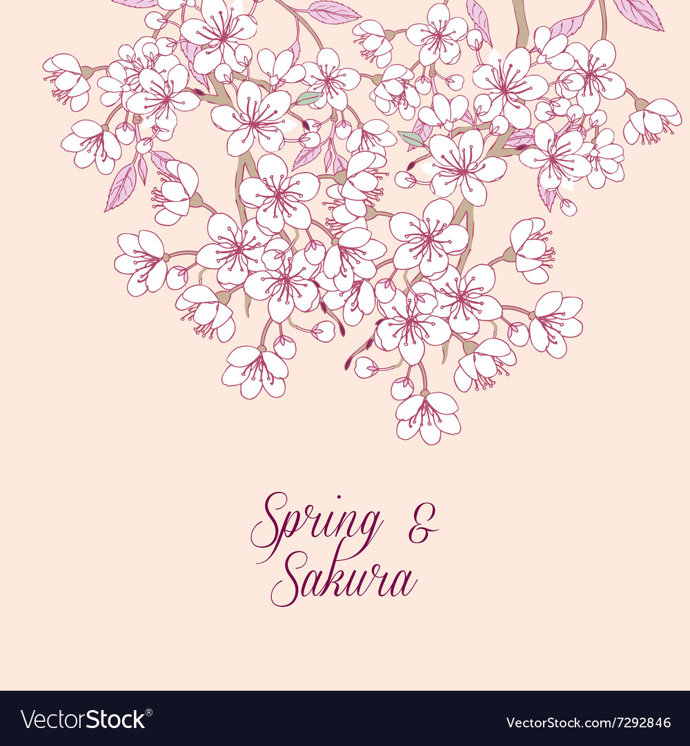 Background with sakura vector