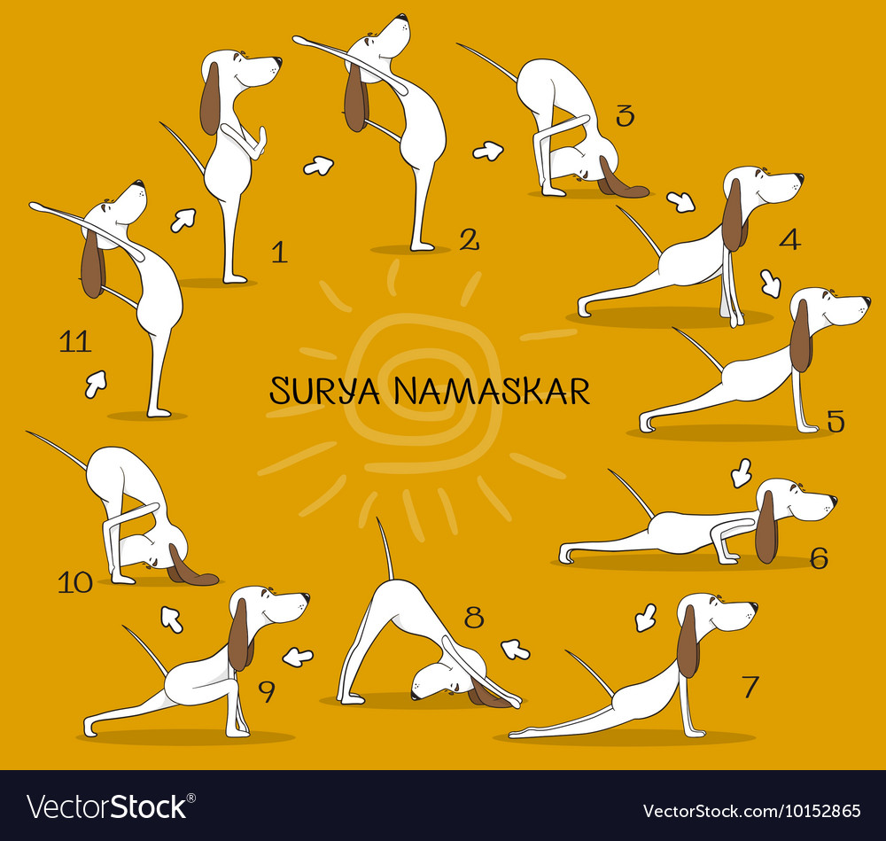 Cartoon positive dog doing yoga position of surya vector