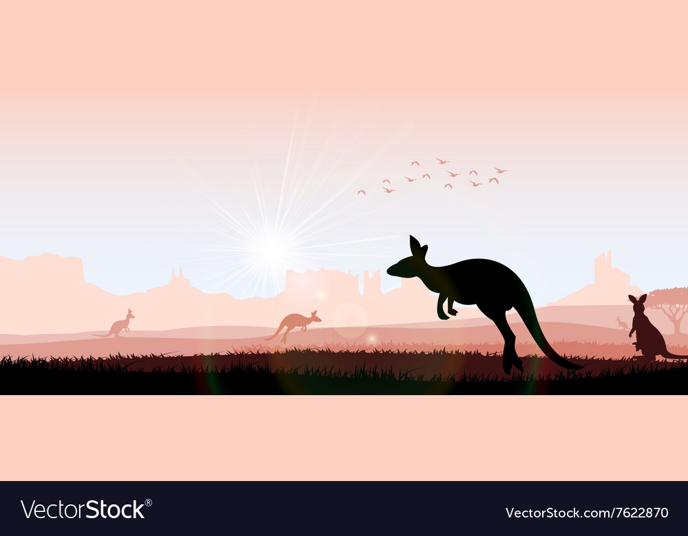 Silhouette kangaroo in the evening vector
