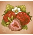 engraving strawberry retro vector image