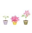 Beautiful Pink Flower on Tree in Terracotta Pots vector image vector image