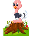 cartoon happy ostrich sitting on tree stump vector image