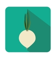 Fresh onion vegetable vector image