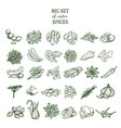 hand drawn organic spices set vector image