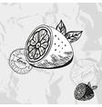 Hand drawn decorative lemon vector image