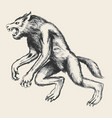 werewolf sketch vector image
