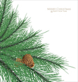 Branch fir with cones vector image