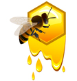 Bee and honeycomb vector image