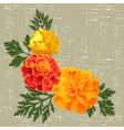 marigolds vector image